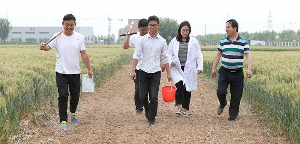 Хэбэйский сельскохозяйственный университет
